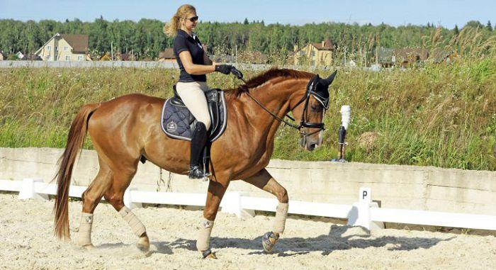 Голландская лошадь