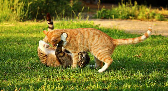кошки на природе