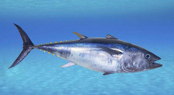 тунец