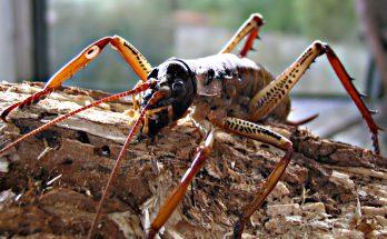 вета насекомое