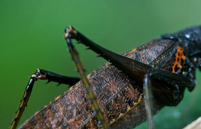 ноги насекомых