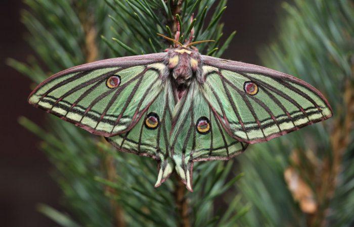 Дневные и ночные бабочки
