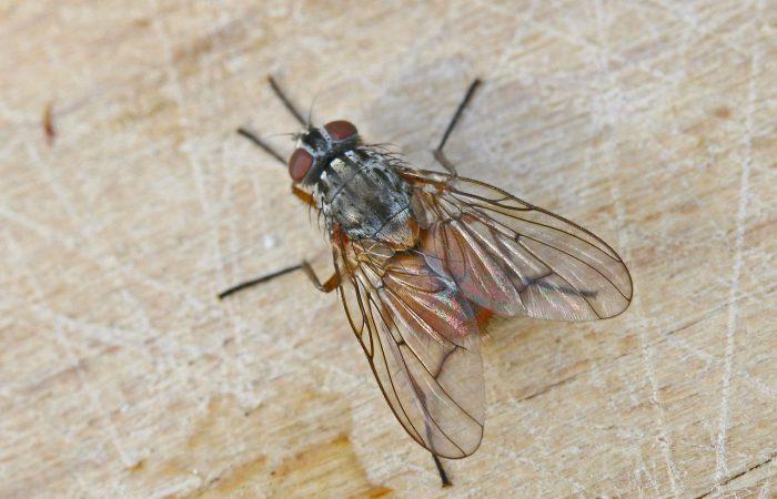 муха на потолке