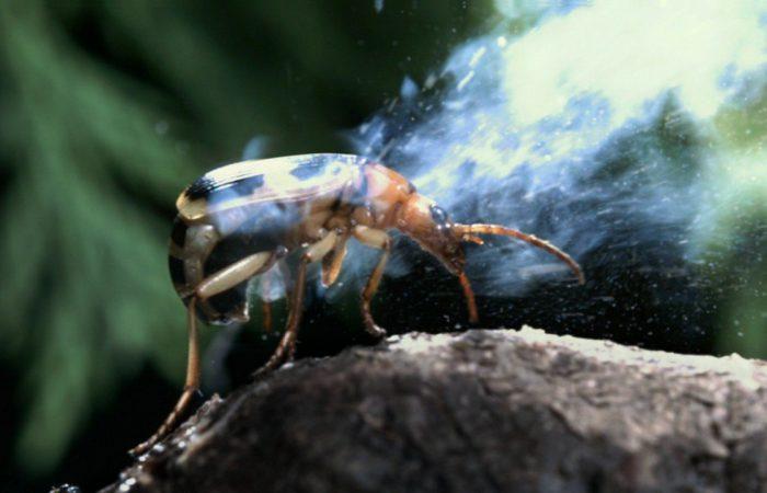 Способы защиты насекомых