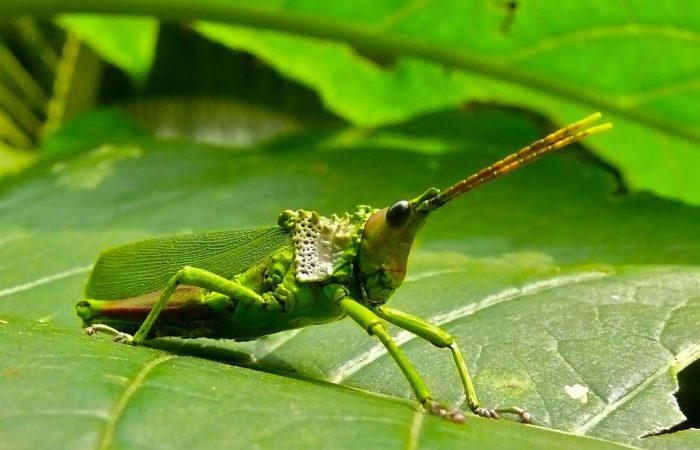 Необычные формы насекомых