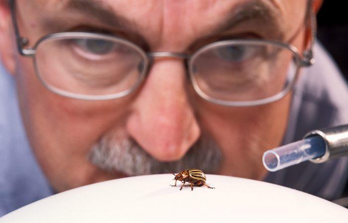 Изучение насекомых