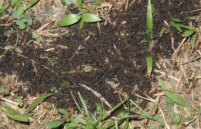 Самые большие скопления насекомых