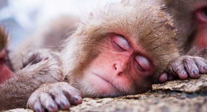 животное спит