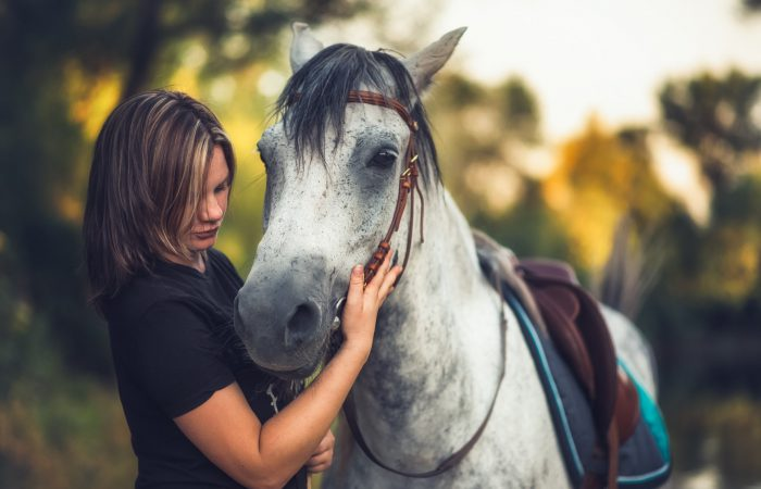 Лошади для досуга
