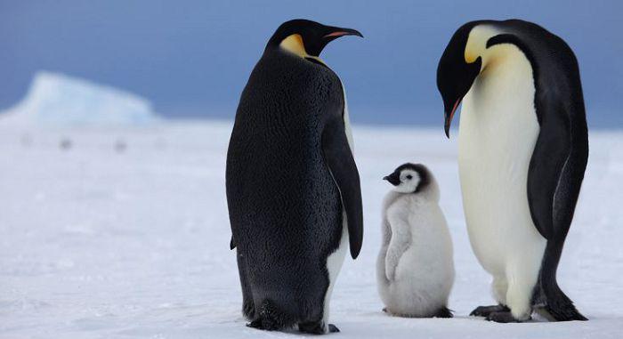 животные живут на Южном полюсе