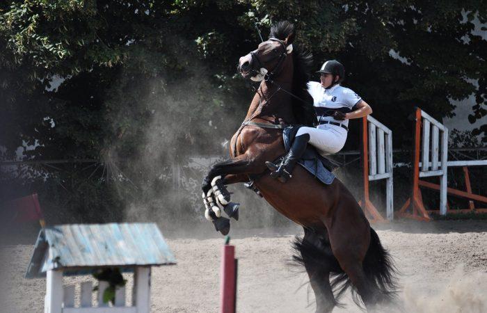 Лошадь не идет вперед