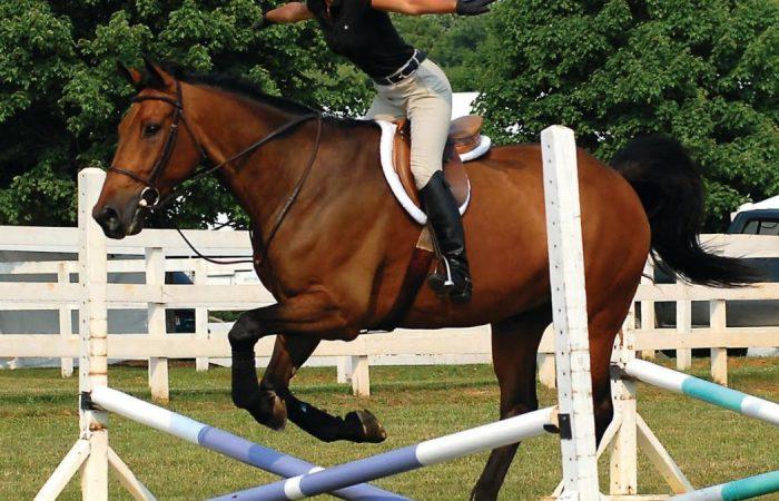 Лошадь «тащит»