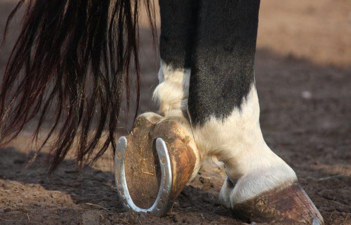 подкова на лошади