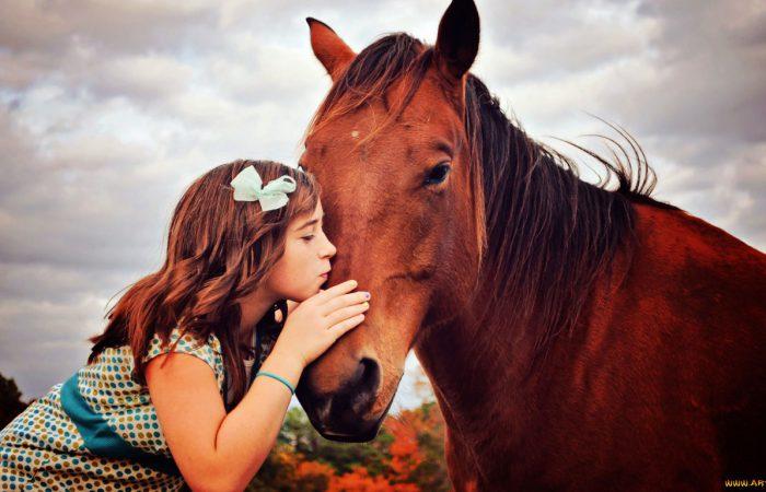 дружба с лошадью