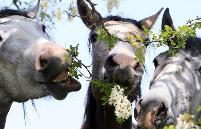 Привычки лошадей