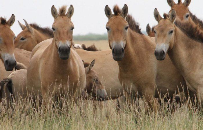 Происхождение лошади