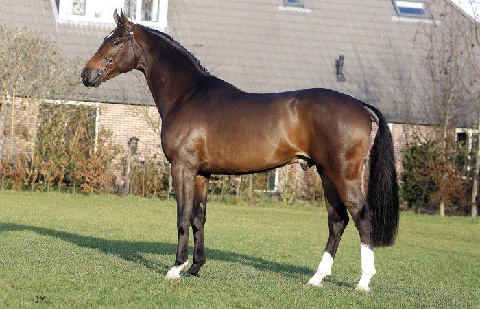 Лошади Дании
