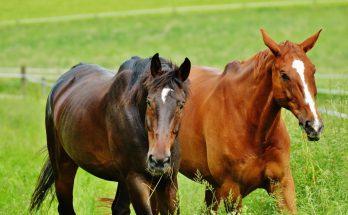 Лошади Германии