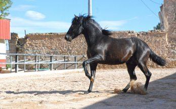 Испанские лошади