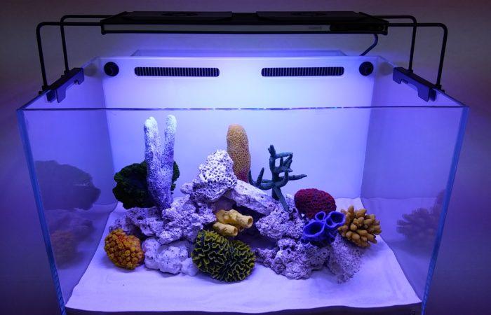 Особенности подготовки воды в новом аквариуме