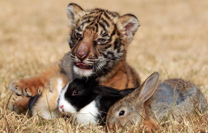животные общаются