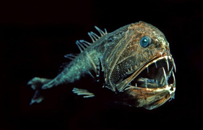 животные на глубине океана