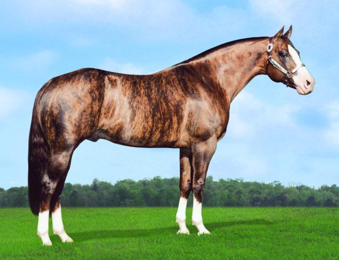 золотая лошадь
