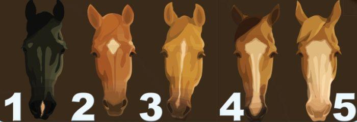 Отметины на голове лошадей