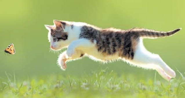 котенок и играет