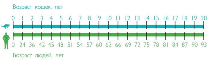 Сравнение возраста кошки и человека