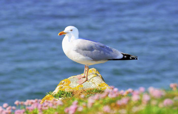 Морские птицы