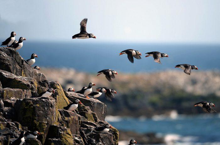 птичья колония