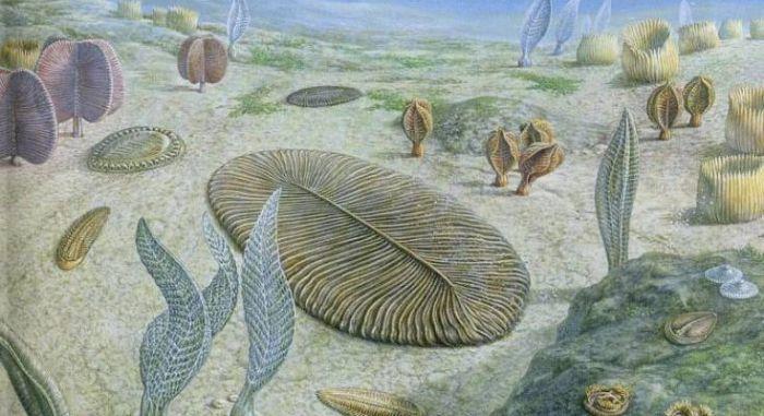 Самые первые животные