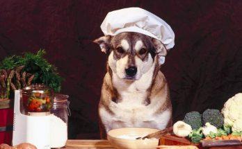 Блюдо для собаки