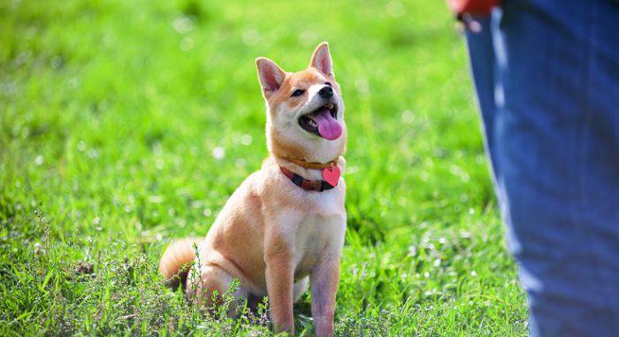 Как обучить собаку выдержке?