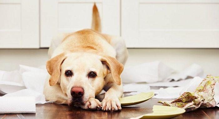 Беспокойство у собаки