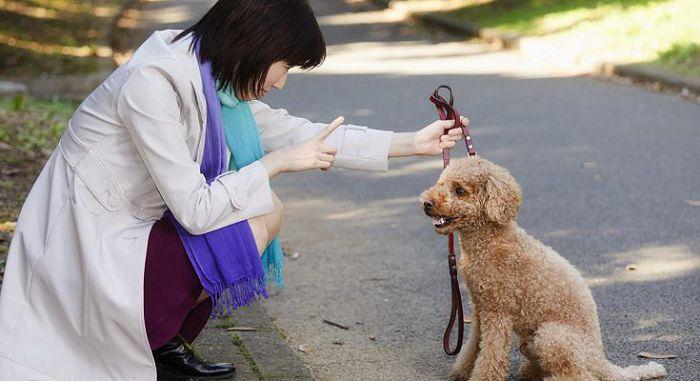 Проблемы с поведением собаки