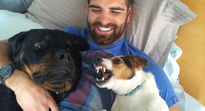 Ревность собаки