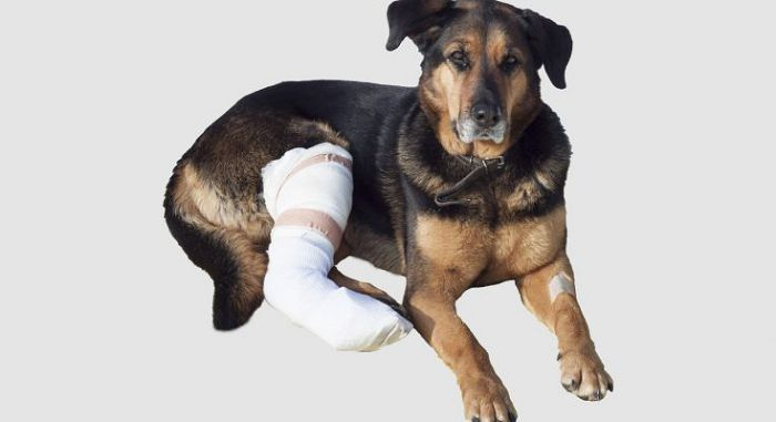 авмы мышц, сухожилий и связок у собак