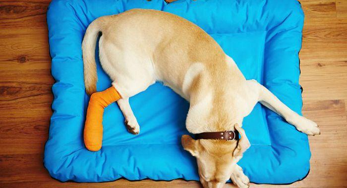 Заболевания костей у собак