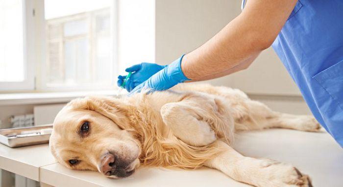 Эфтаназия собак