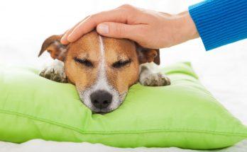 Уход за больной собакой