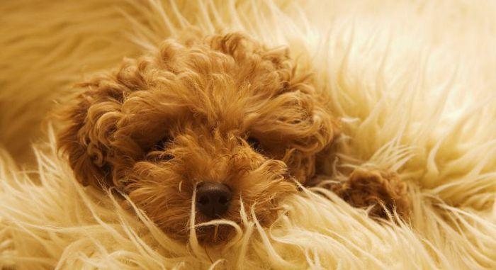 состояние шерсти у собаки