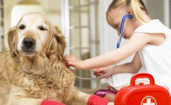 Оказание первой неотложной помощи для собаки