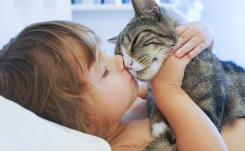 Профилактика болезней, передающихся от кошек