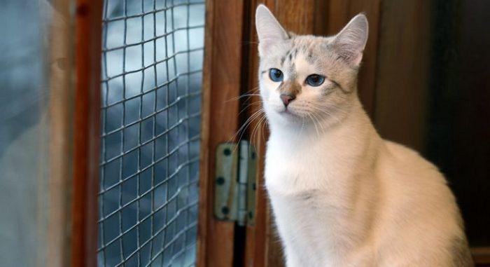 Кошка из приюта