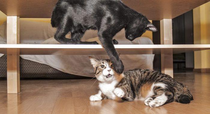 Проблемное поведение кошек