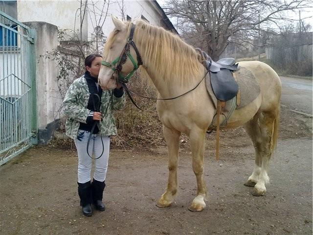 Торийская лошадь