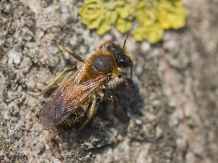 Перепончатокрылые насекомые