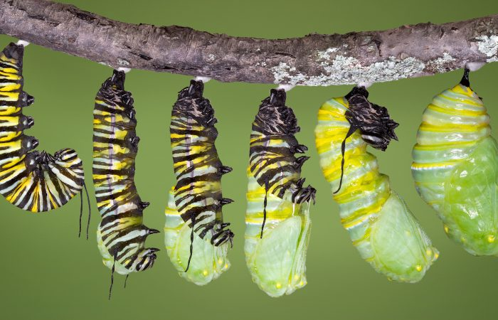 Жизненный цикл насекомых